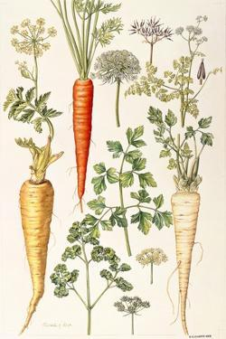 Carrot, Parsnip and Parsley by Elizabeth Rice