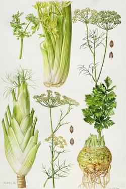 Celery, Fennel, Dill and Celeriac by Elizabeth Rice