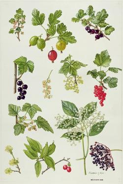 Currants and Berries by Elizabeth Rice