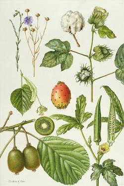 Kiwi Fruit and Other Plants by Elizabeth Rice
