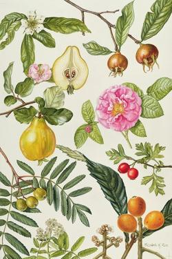 Quince and Other Fruit-Bearing Trees by Elizabeth Rice