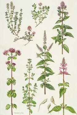 Thyme and Other Herbs by Elizabeth Rice