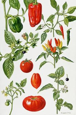 Tomatoes and Related Vegetables, 1986 by Elizabeth Rice