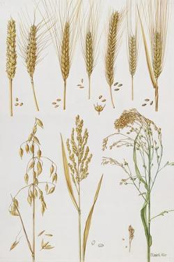 Wheat and Other Crops by Elizabeth Rice