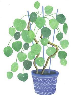 Pilea Plant by Elizabeth Rider