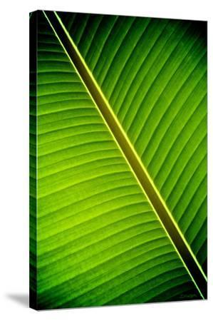 Tropical Shade