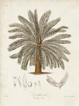 Antique Tropical Palm I