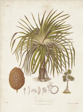 Antique Tropical Palm II