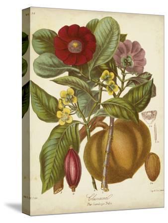 Twining Botanicals I