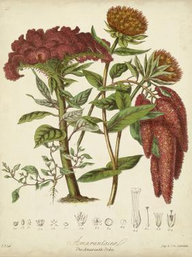 Twining Botanicals II by Elizabeth Twining