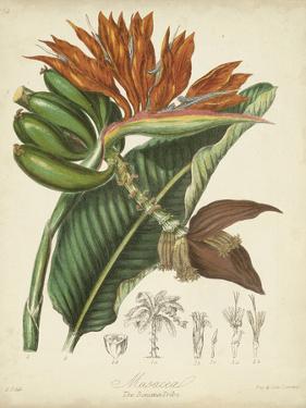 Twining Botanicals III by Elizabeth Twining