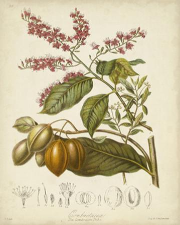 Twining Botanicals IV