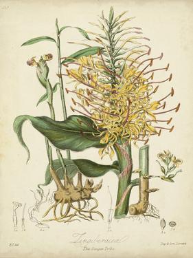 Twining Botanicals VII by Elizabeth Twining