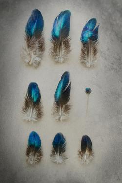 Blue Feather Still Life by Elizabeth Urqhurt