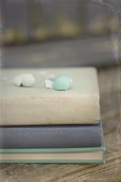 Boken Robin's Egg on Vintage Books by Elizabeth Urqhurt