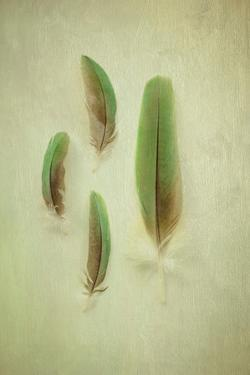 Still Life Feather Collection by Elizabeth Urqhurt