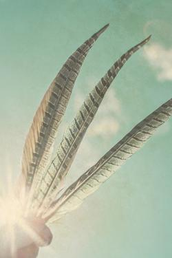 Sunny Sky with Blue Feathers by Elizabeth Urqhurt