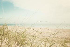 Beach Grass V Light by Elizabeth Urquhart