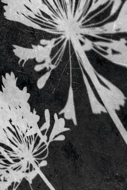 Allium Shadow by Ella Lancaster