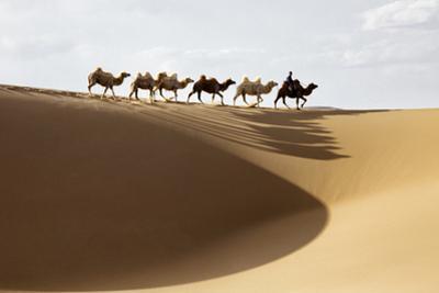 Camel caravan, Badain Jaran Desert, Inner Mongolia, China. by Ellen Anon