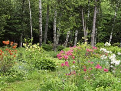 Garden and Forest in New Brunswick, Canada by Ellen Anon