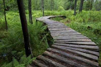 Log Walkway in Forest, New Brunswick, Canada by Ellen Anon