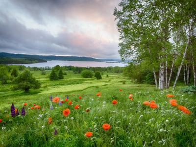 Meadow Landscape, New Brunswick, Canada by Ellen Anon