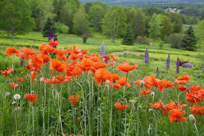Wildflower Landscape, New Brunswick, Canada by Ellen Anon