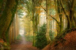 Following Fog by Ellen Borggreve