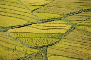Asia, Bhutan, Paro, Rice Fields by Ellen Goff