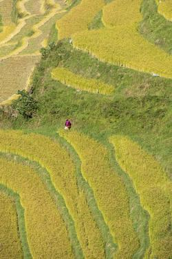 Asia, Bhutan, Trongsa Area. Rice Paddies by Ellen Goff