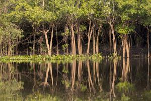 Brazil, Mato Grosso, the Pantanal, Rio Negro. Trees Along the Rio Negro by Ellen Goff