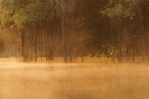 Brazil, The Pantanal, Rio Cuiaba. The mist rises off the river in the early morning. by Ellen Goff