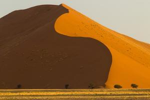 Namibia, Namib-Naukluft National Park, Sossusvlei. Dunes in evening light. by Ellen Goff