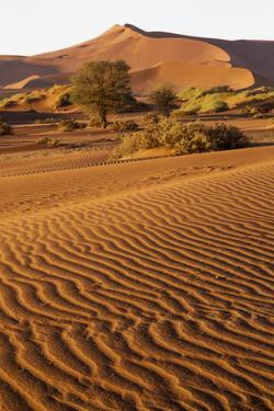 Namibia, Namib-Naukluft National Park, Sossusvlei. Scenic red dunes. by Ellen Goff