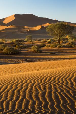 Namibia, Namib-Naukluft National Park, Sossusvlei. Scenic red dunes. by Ellen Goff