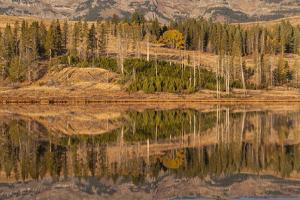 Usa, Wyoming, Yellowstone National Park. Swan Flats in autumn at dawn. by Ellen Goff