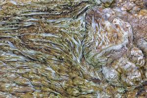 Wyoming, Yellowstone NP, Mammoth Hot Springs. Mineral deposits create patterns by Ellen Goff