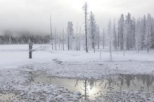 Wyoming, Yellowstone NP, near Midway Geyser Basin. Early morning frost by Ellen Goff
