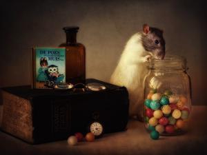 Gumballs by Ellen Van Deelen