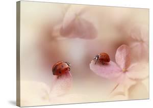 Ladybirds On Pink Hydrangea. by Ellen Van Deelen