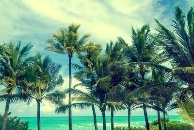Tropical Palm Trees on the Miami Beach near the Ocean, Florida, Usa, Retro Styled