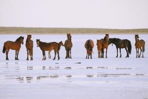 Salt and Horses by Elmar Akhmetov