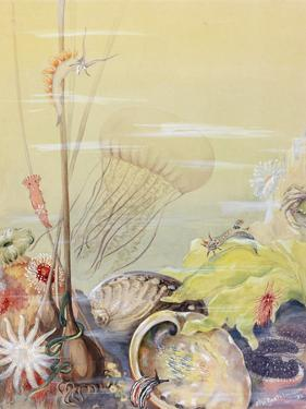 A Painting of a California Marine Sea Life Scene by Else Bostelmann