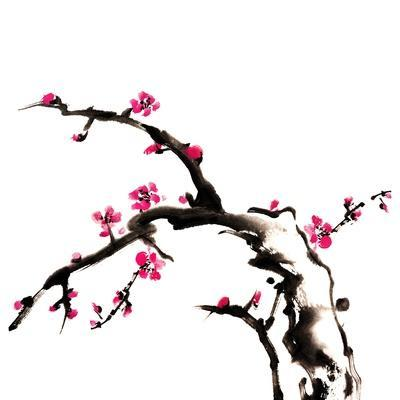 Chinese Painting Of Flowers, Plum Blossom, On White Background