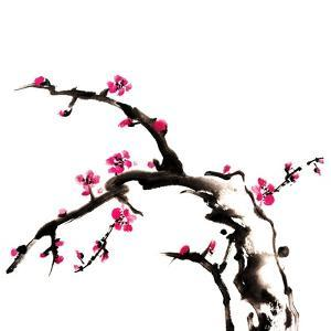 Chinese Painting Of Flowers, Plum Blossom, On White Background by elwynn