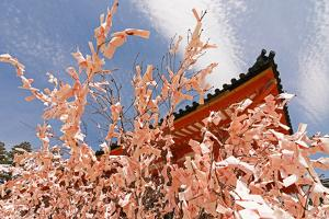 Kyoto, JAPAN - APRIL 19Th : Pink Paper Pray for Good Luck Tied on a Dry Twig in Heian Jingu Shrine, by elwynn