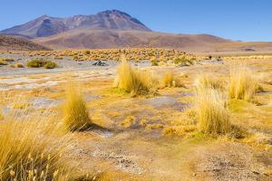 Bolivia, Antiplano - Canapa Lake by Elzbieta Sekowska