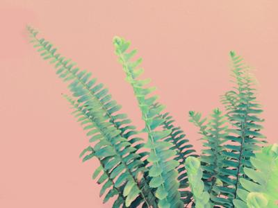 Ferns On Pink by Emanuela Carratoni