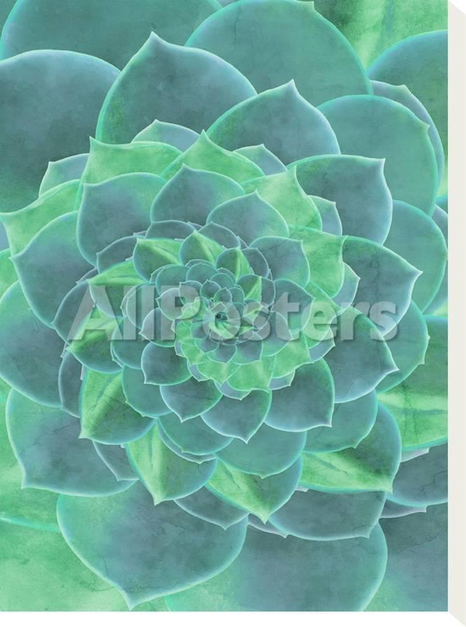Geometric Succulent Prints Emanuela Carratoni Allposters Com